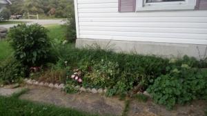 Front Flower Garden August 2014